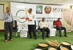 Gapi e Agência do Zambeze impulsionam cadeia de valor do arroz